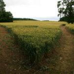 Twee gescheiden wegen in een open veld met plantengroei